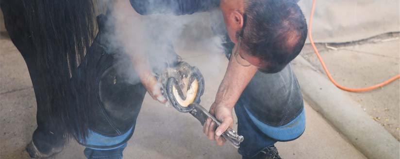Slide - A farrier is hot-shoeing a horse